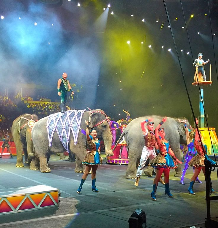 The Ringling Bros. and Barnum & Bailey Circus Xtreme Performance is now at The Honda Center in Anaheim, California through August 2, 2015.