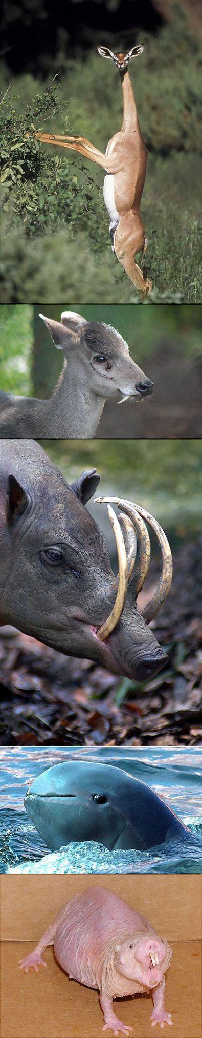 (+1) тема - Редкие животные, о которых слышал не каждый   Среда обитания