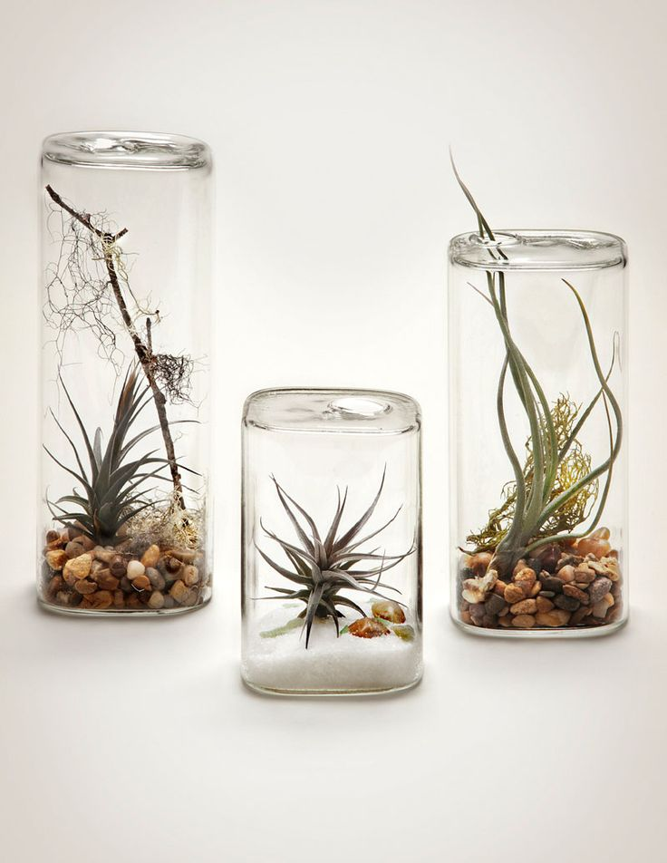 """6 Creative Ideas For Displaying Air Plants In Your Home // Display Them In An """"Aerium"""""""