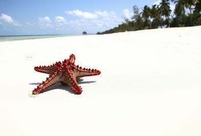 Zanzibar  ROULETTE ZANZIBAR  Per le spiagge non facilmente balneabili a causa del fenomeno dell'alta e bassa marea, le strutture possono mettere a disposizione degli ospiti delle barche veloci per raggiungere altre spiagge vicine.