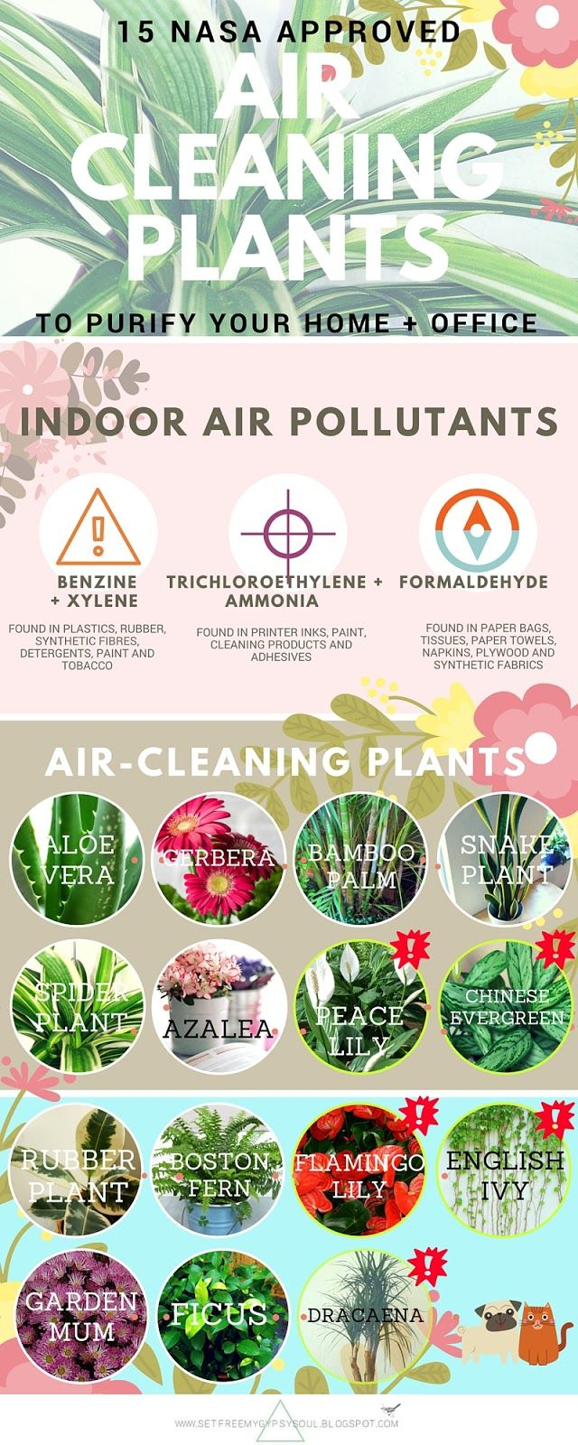 Air Purifying Houseplants |15 air-cleaning plants to purify the air in your home, office or workspace from the NASA Clean Air Study