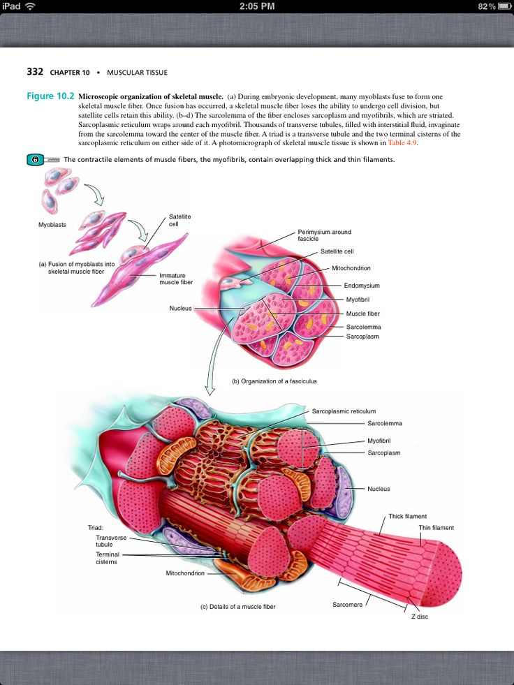 Holes anatomy and physiology chapter 17. Essay Service ...