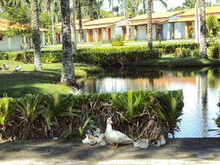 Guia Comercial da Bahia: Day Use Passeio de um dia no Hotel Fazenda Recanto...