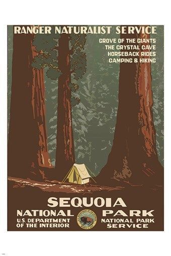 SEQUOIA NATIONAL PARK vintage nature poster 1938 RANGER NATURALIST 24X36 new Brand New. 24x36 inches. Will ship in a tube. - Multiple item purchases are combined the next day and get a discount for do