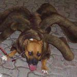 Spider dog!