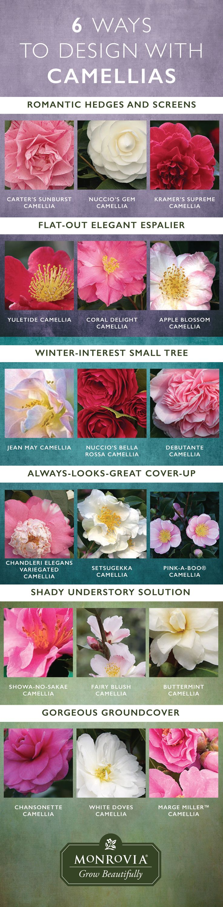 From groundcovers to small trees, camellias can fill many corners of the garden with long-lasting blooms.