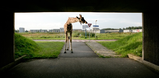 Filmopnames New Marshlands (2009) van Frank Koolen op SITE2F7. © Gert Jan van Rooij, Museum De Paviljoens