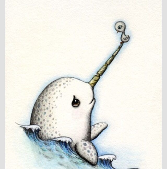 how to draw a narwhal step by step easy
