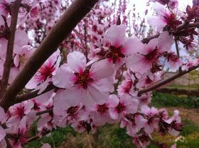 La primavera nos ofrece un sin fin de posibilidades para salir y observar la naturaleza.   Esta mañana hemos salido para poder obse...