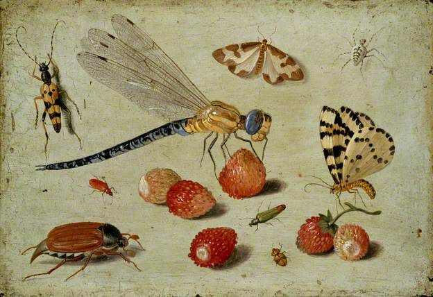 Jan van Kessel, A Dragon-fly, two Moths, a Spider and some Beetles, with wild Strawberries, oil on copper,  9 x 13cm, early 1650s