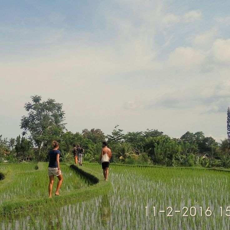 walking explore ababi village trough the village jungle, rice terraces and finishing in tirtagangga watet garden and have a swim to refresh your body