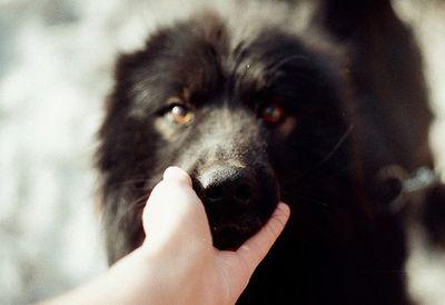 Kila's dog, Artemis