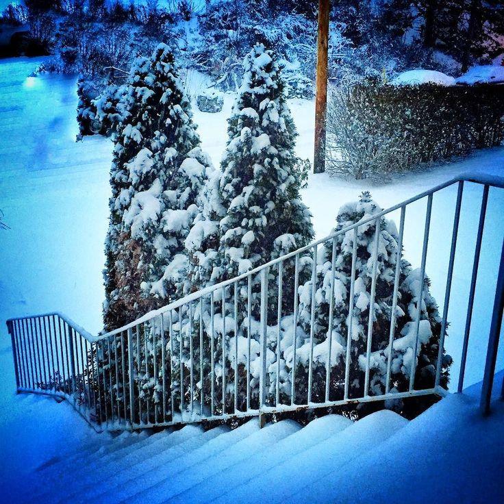 #InstagramELE | #parte | Cuando nieva la parte que más me gusta es lo bonitos que se quedan los árboles. Y la parte que me gusta menos .... umm. Mejor lo cuento otro día.