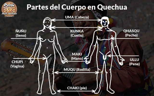 El Cuerpo Humano Y Sus Partes En Quechua Imagenes Partes