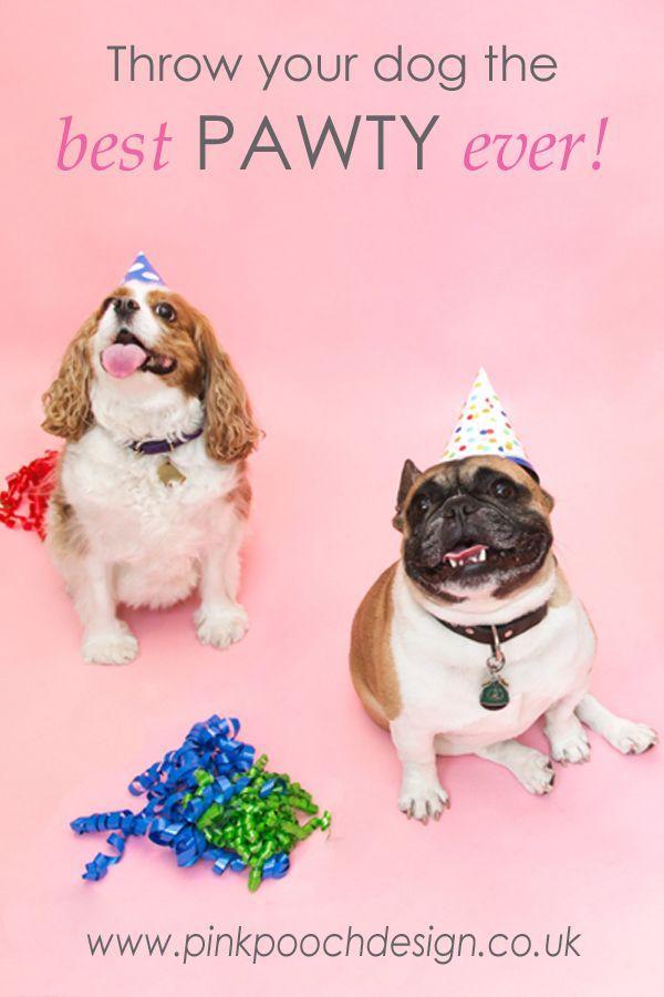 Birthday Hat For Dog Memi The Rainbow Happy Fifi