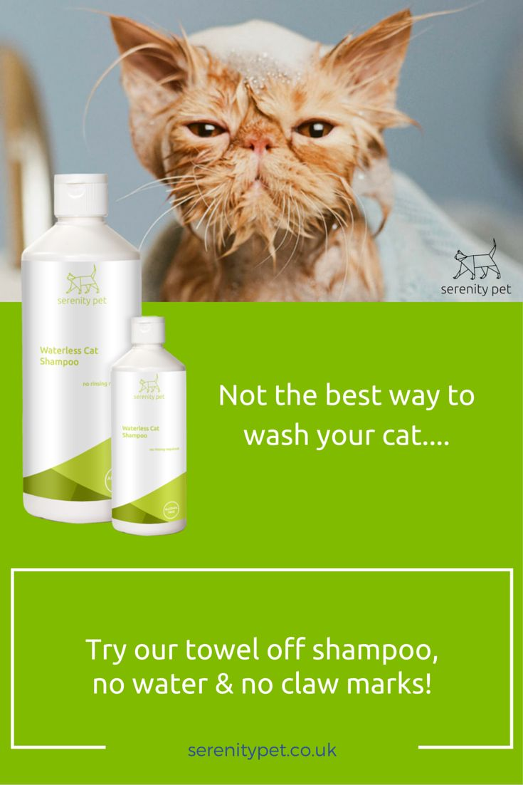 Don't bubble bath your cat! Get a lovely clean, fresh smelling kitty without any stress!