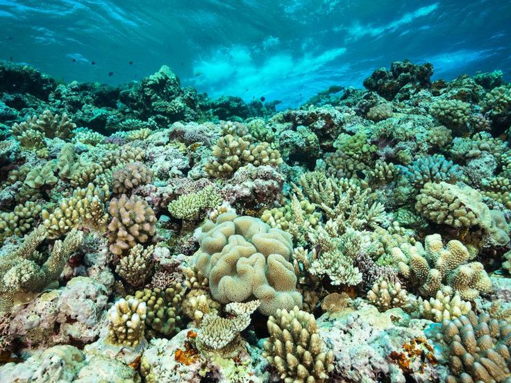 Could this save the precious coral reefs? Find out by reading the article on smithsonianmag.com | Science | Innovations | Oceans | Nature | Coral Reefs |