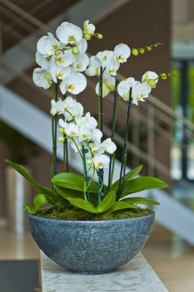 Orchid office reception display Basingstoke