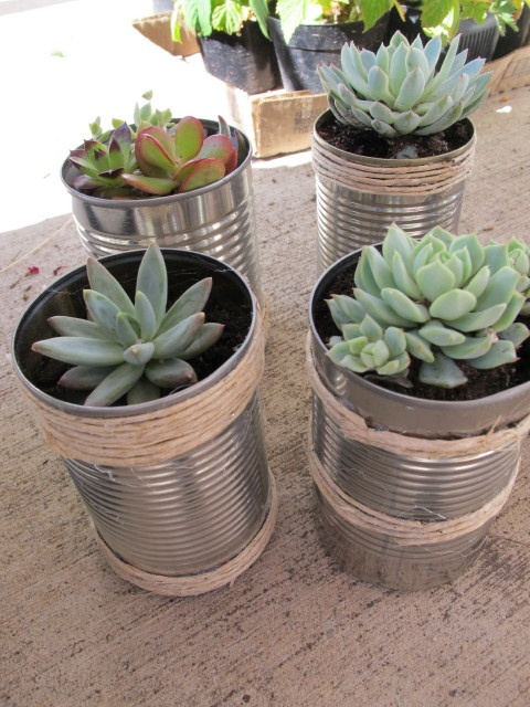 Tin can planter - these would be cute separate or tied together