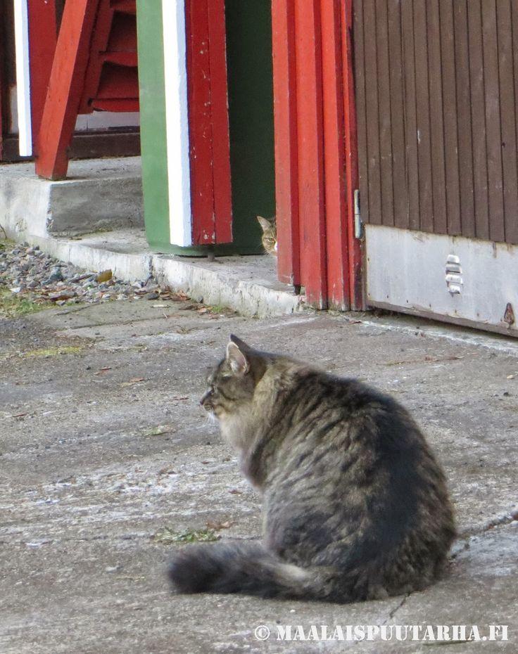 Karelian cats