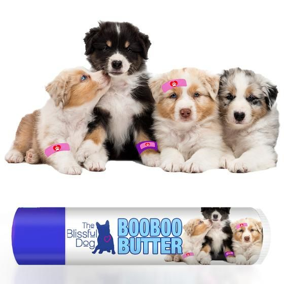 BOO BOO BUTTER for your Australian Shepherd's itchy skin, rashes, scratches, scrapes and such.