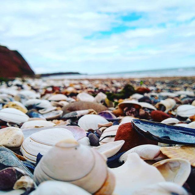 Beach Sand Seashells Sky Blue Ocean Landscape Photography Beach Sand Seashells Sky Blue Ocean Landscape Ocean Landscape Beach Sand Blue Ocean