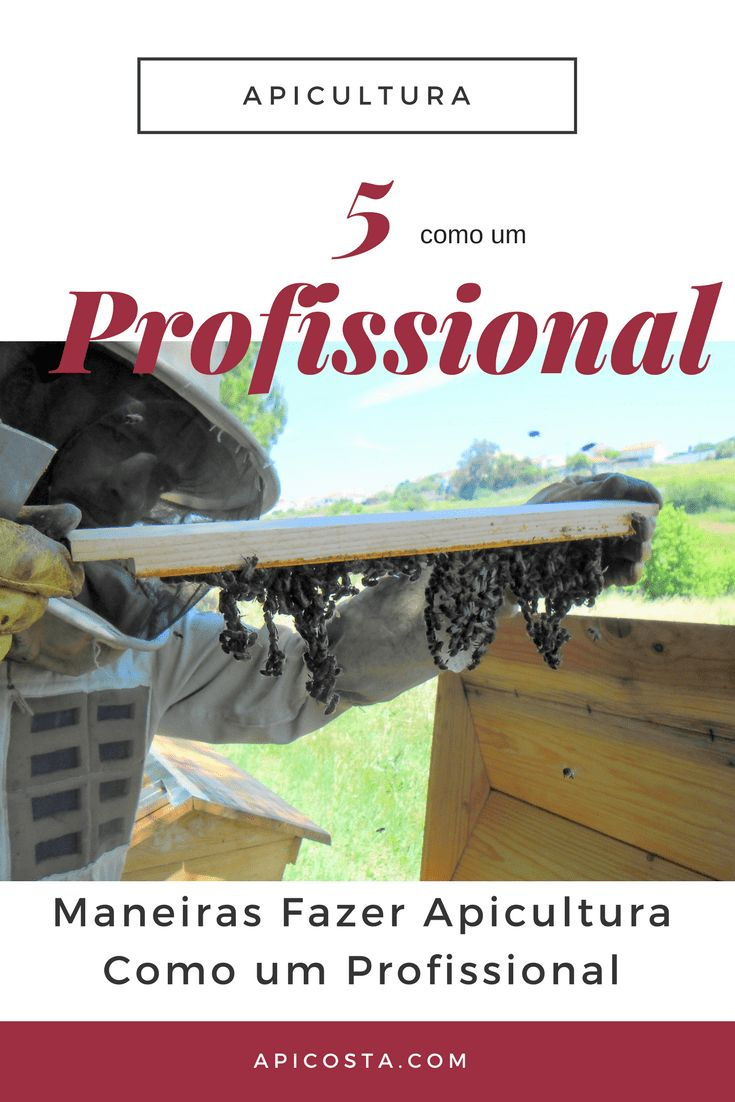 apicultura como um profissional
