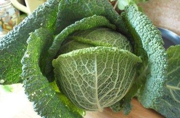 Савойская капуста - полезные свойства. Рецепты приготовления вкусных блюд из савойской капусты с фото