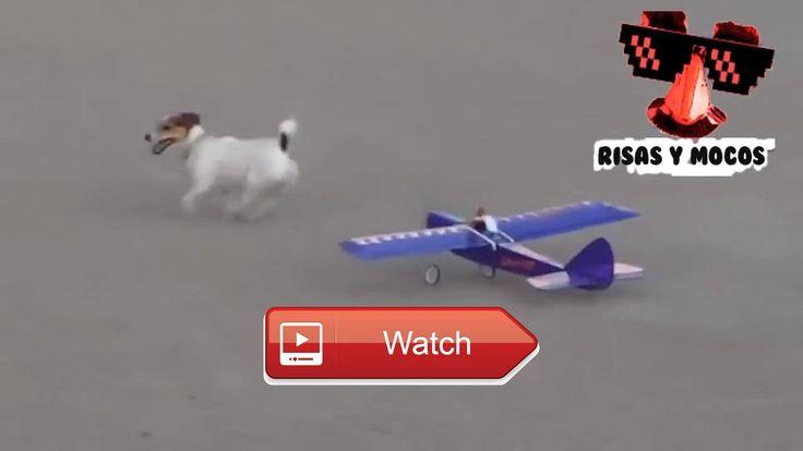 Cats And Dogs Vs Remote Control Toys To Die Of Laugh HD VIDEO  Cats And Dogs Vs Remote Control Toys To Die Of Laugh HD VIDEO Gatos Y Perros Vs Juguetes De Control Remoto Para Morirse De La Risa HD  on Pet Lovers