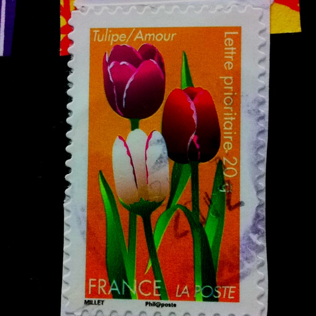 Tulip from France