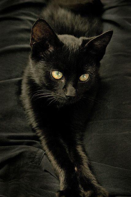 Velvety black kitten with those gorgeous green-gold eyes.