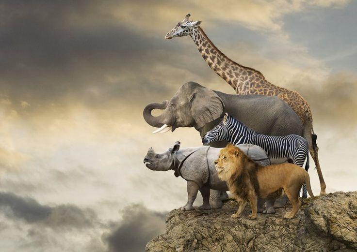 EDUCA Puzzle Zvířata na kraji útesu 500 dílků
