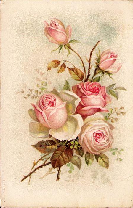 Петушок, винтаж открытки розы
