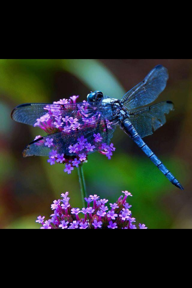 24 best Beautiful insects images on Pinterest ...