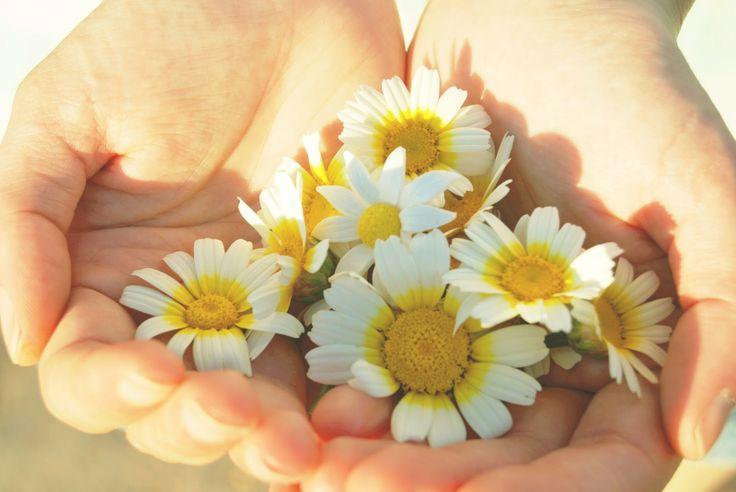 Un preciosísimo anillo de margarita, te lo pones? Fimonita Handmade: La primavera en tus manos