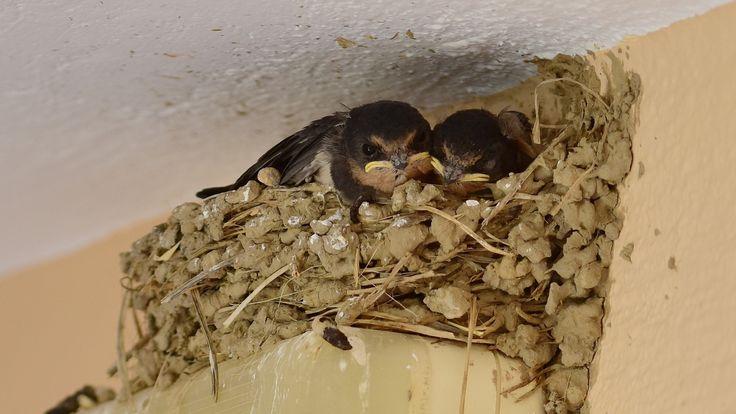 Přečtěte si o tom, kolikrát denně musejí ptáci denně do hnízda s potravou, aby nakrmili mladé. Tohle číslo neuhodnete!