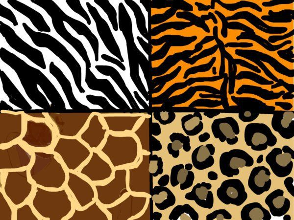 Animal have good patterned hair which is goo when linking in to links such as background and filling in objects such as typography