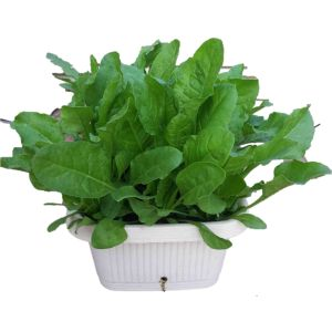 Includes 5 planter boxes, organic filler material for all the 5 planter boxes with 5 different types of leafy vegetable seeds such as Methi, Corriander, Spinach, Dhantu (Amaranthus) and Fennel OR Lettuce.