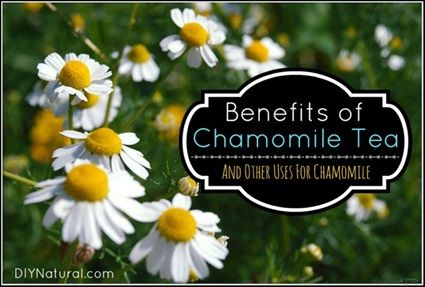 15 Benefits of and Uses For Chamomile (+ a Recipe)