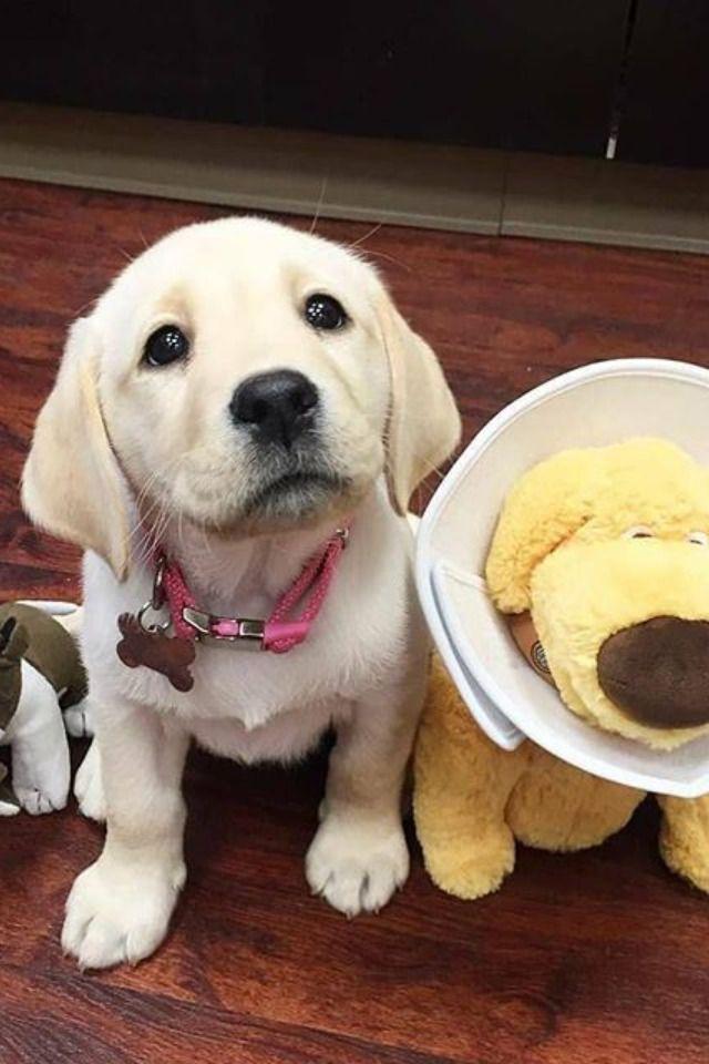 Pin By Haniya On Puppy Aggressive Dog Dog Food Brands Puppies