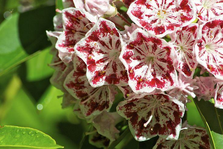 Цветы, которые за внешним лоском скрывают смертельную угрозу (8 фото)