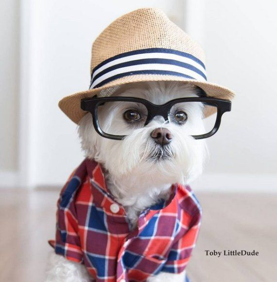 These Dogs Might Be More Hipster Than You - Tap the pin for the most adorable pawtastic fur baby apparel! You'll love the dog clothes and cat clothes! <3