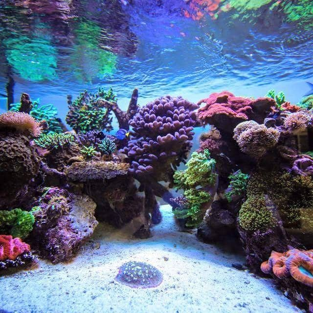 Best 25+ Reef Aquascaping Ideas On Pinterest