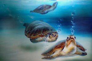 91 best sea turtles images on pinterest sea turtles for Turtle fish paint