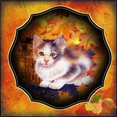 Cat,autumn