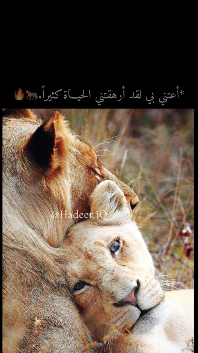 Pin By ن ون اي ة On Lion اسد Short Quotes Love The Magicians Syfy Bride Quotes