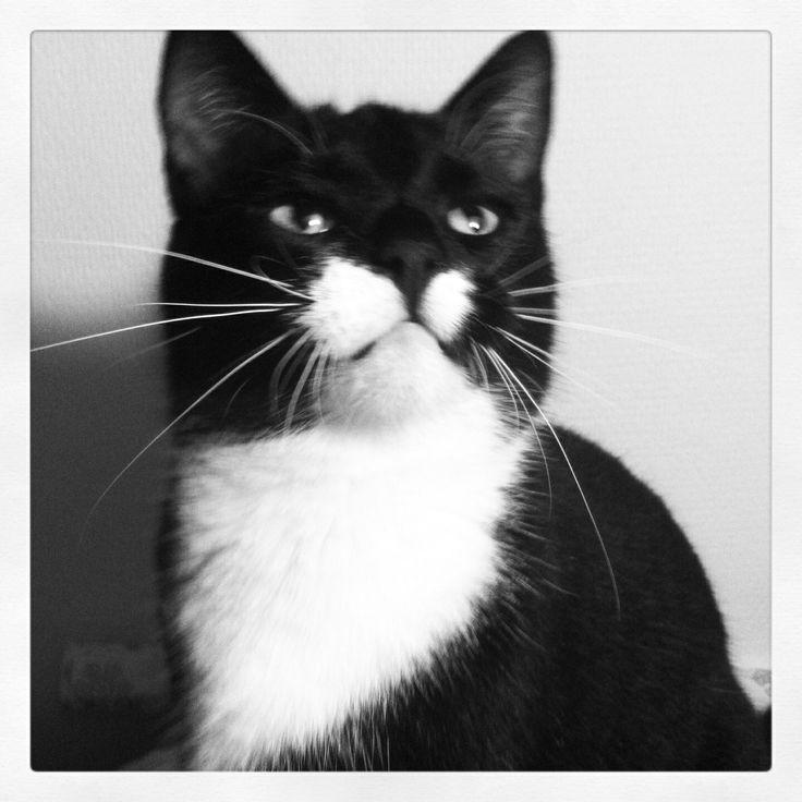 My beautiful kitteh!
