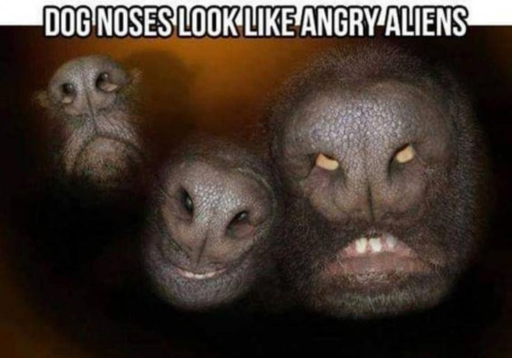 lol they kinda do!  #life #truth #pets #hilarious #socute #g