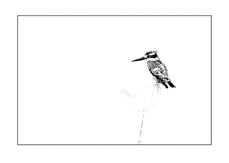BW animal print of a kingfisher