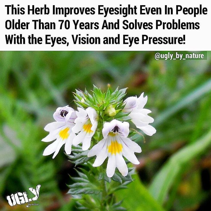 The plant Eyebright was known as #Euphrasia in Roman times  named after the Greek migrate Euphrosyini (meaning joy). The plant actually brought joy to everyone who used it because it healed their eyes.  Ancient Romans also called it the eyes of the Mother of God because of its proven medicinal properties in treatment of eye diseases.  It's available even and is still part of natural medicine because of its amazing properties to restore #vision.  There are several powerful substances in the…
